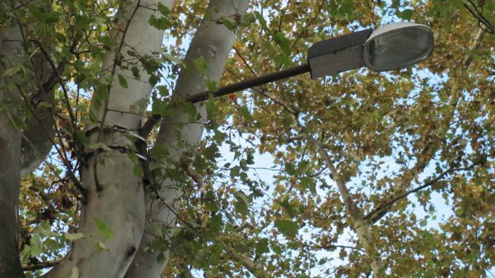 лента бандажная закреплен светильник на дереве