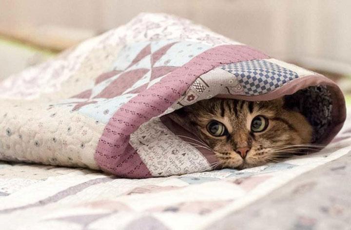 подогрев ковриков для животных