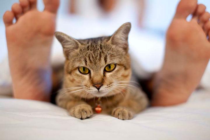 обогрев подстилки для кошек