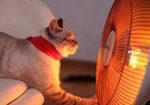 Ремонт тепловентилятора дуйчика своими руками — схема, причины неисправности, термозащита.